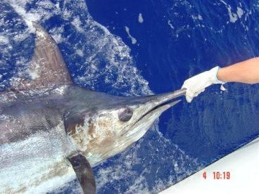 we release our billfish