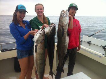 White Sea Bass