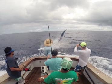 400lb Black jumping on the wire 4 miles off salani resort.