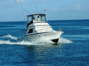 Fish Saint Lucia - Xiphias Seeker, Castries City