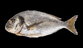 Gilt-head (Seabream)