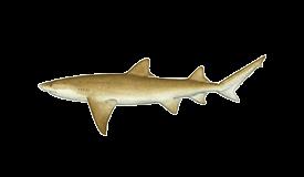 Shark (Lemon)