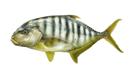 Trevally (Golden)