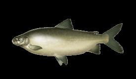 Whitefish (Lake)