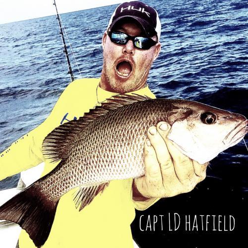 LD Hatfield
