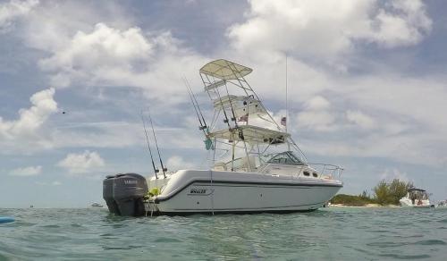 Amigo Fishing