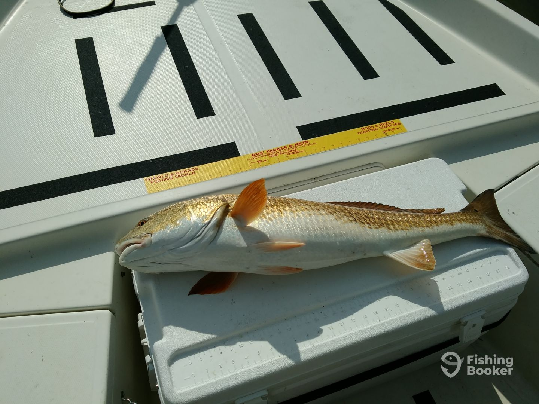 23lb. Redfish over 30
