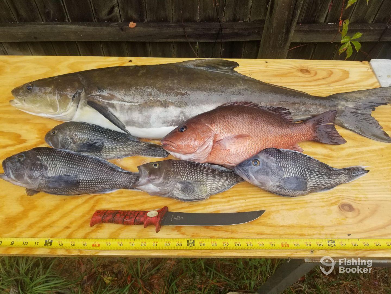 Cobia Mangrove snapper sea bass
