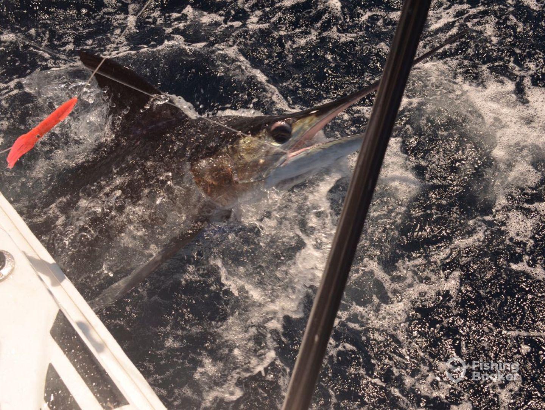 Galapagos Report Photo 0