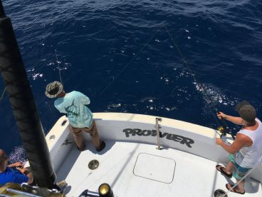 Fishing Reports by Prowler Fishing Charter - Hatteras, Hatteras