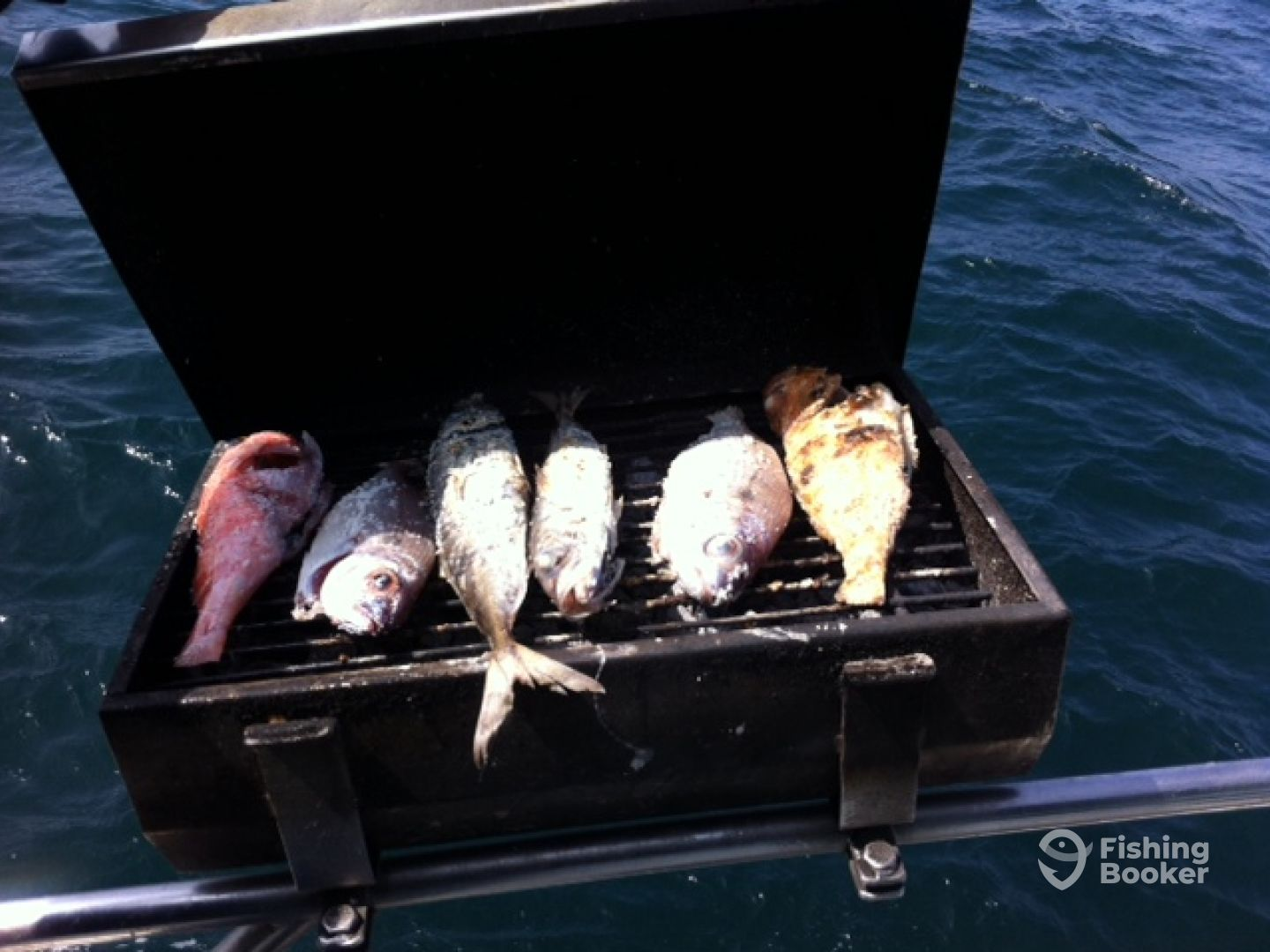 They catched the fishes, we clean and grill they eat!!