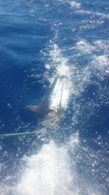 Funchal Report Photo 1