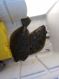 Chincoteague Island Report Photo 4