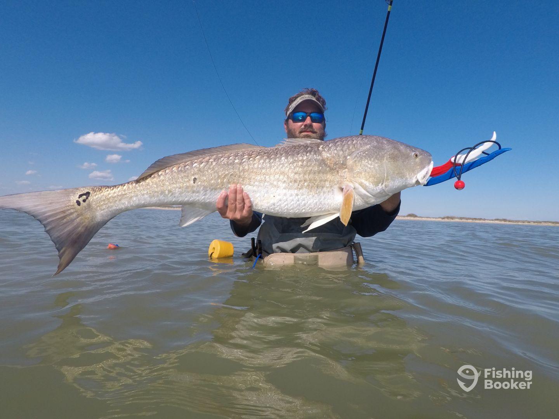 Excellent redfish and drum bite corpus christi fishing for Corpus christi fishing report