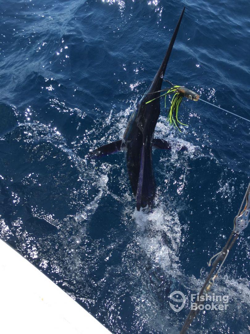Marlin hook up
