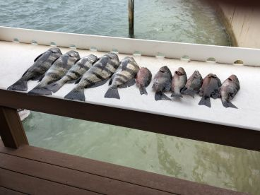 Half day fishing with Captain Scott Collins, Gettin Lucky Sportfishing