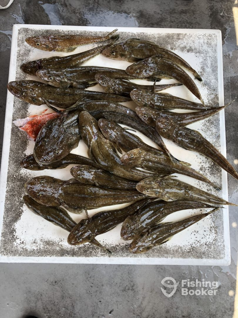 I just found Deep Blue Charters - Susannah on FishingBooker