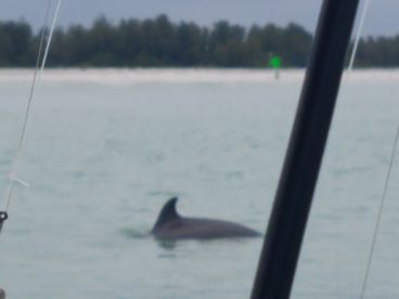 Family of 3 dolphins tagged along to watch us..