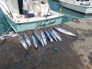 Fish, fish, and more Fish!