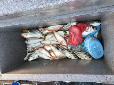 We got a lot of fish