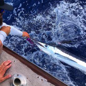 First Marlin