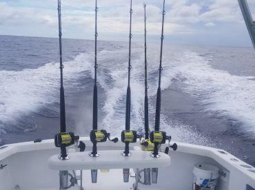Tuna, Pilot Whales and Sailfish