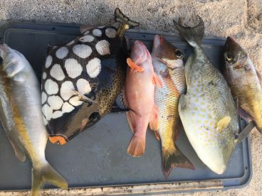 Mixed bag we caught to