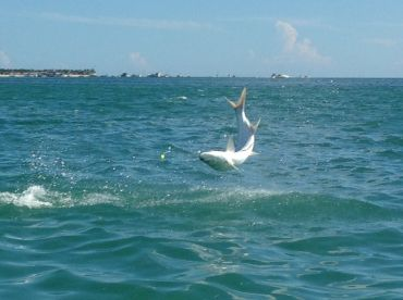 Exciting day on the water catching Tarpon !