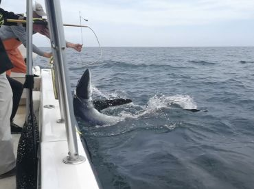 8 hour offshore sharking tour