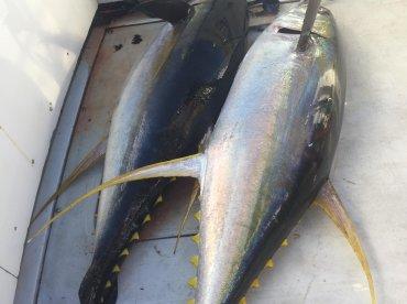 MV Pure Indulgence - Troppo Fishing