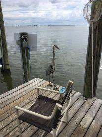 6 hour inshore trip