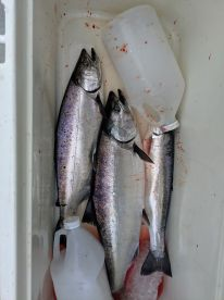 Just some of our second day catch,