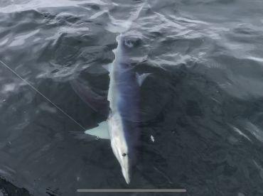 Full Day Offshore Shark Trip