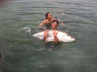 Shark and tarpon