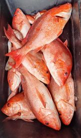 Nice box of red snapper