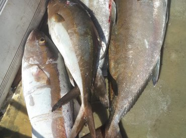 Fishing Trip To Las Perlas Panam\u00e1