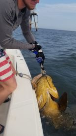 Capt. Randy is the Goliath Whisperer!  For fish to the boat!