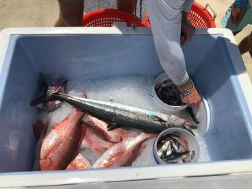 Our 11 year old got his first King Mackerel