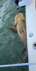 Another bucket list item checked off (Goliath Grouper)