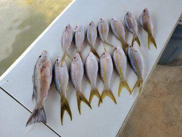 Half Day Reef Fishing!