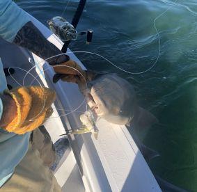 3 hour shark and tarpon trip