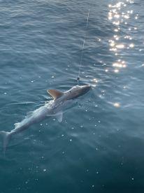 6 hour shark trip with Captain Randy