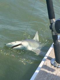 3 hour shark fishing trip