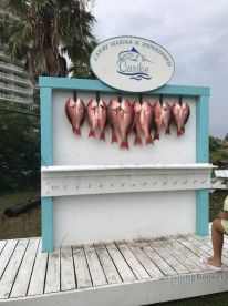 Our catch after we reeled in over two dozen.