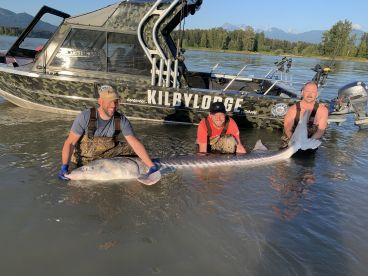 Swedish guys with 10foot 4inches long sturgeon