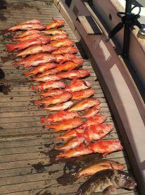 8 hour Chartered Fishing Trip