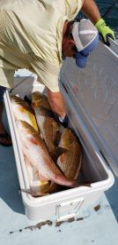 Great half-day charter with Shearwater crew