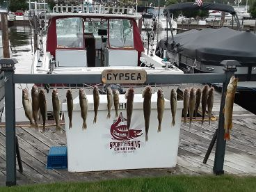 1\/2 day trip with Capt. Shane