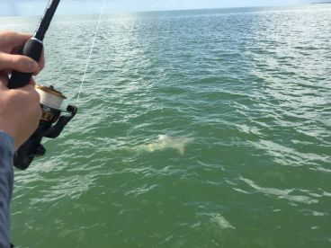 Half Day Shark Fishing Trip With Captain Brad