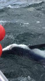 Full day offshore shark fishing